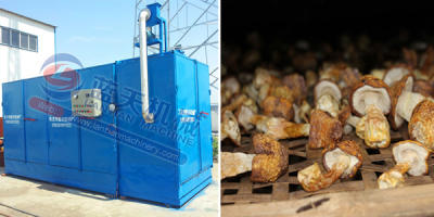 Agaricus Blazei Murrill Dryer Machine
