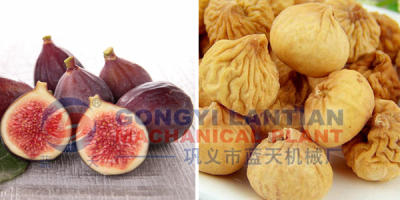 Fig Fruit Dryer